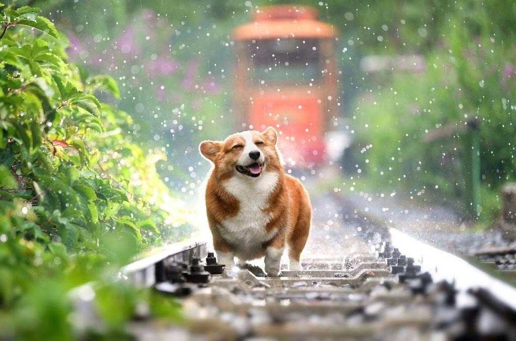 chien eau train