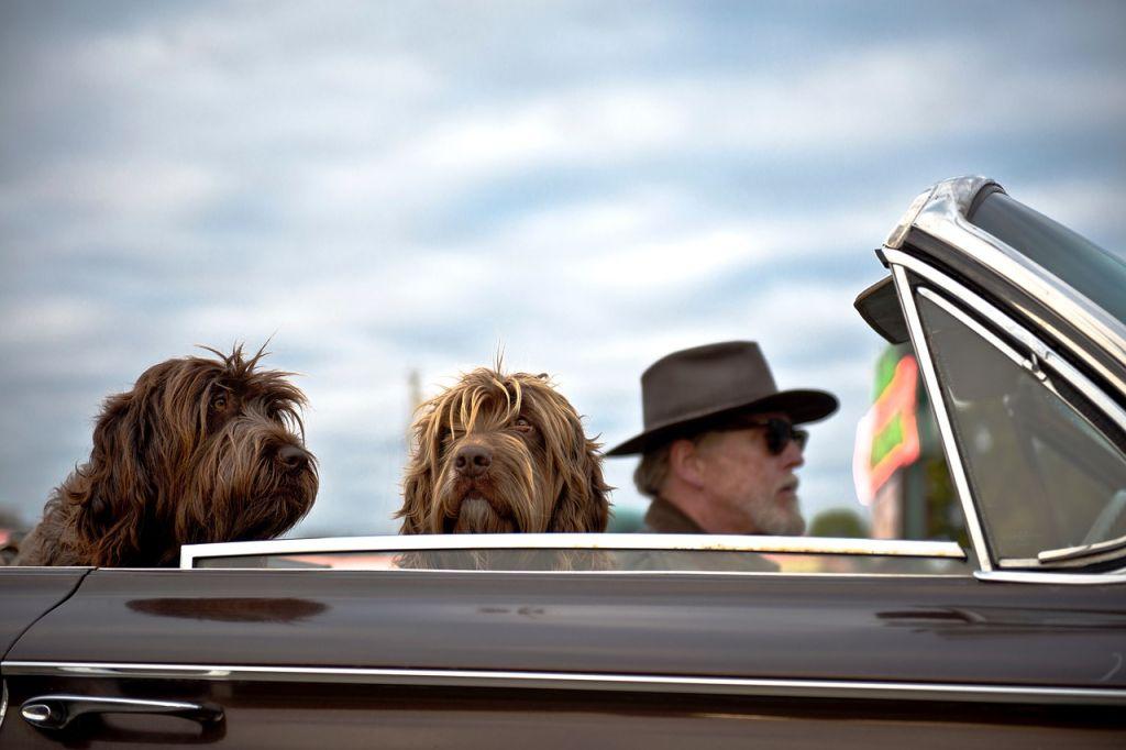 chien voiture expatriée
